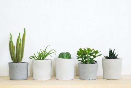 3 indendørsplanter der er perfekte til dit hjem