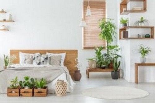 Planter skaber et mere elegant hjem