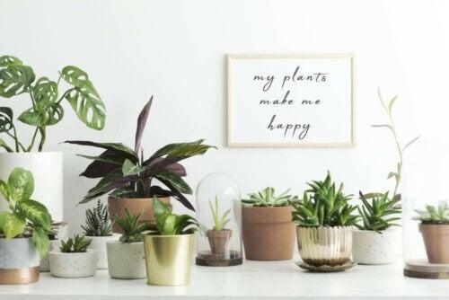 Planter er godt for indeklimaet