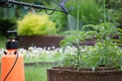 Planter bliver sprøjtet for at beskytte dem