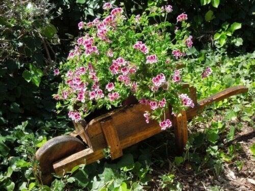 De bedste myggeafvisende planter til dit hjem