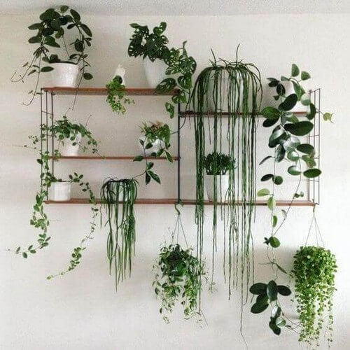 Hylder fyldt med planter