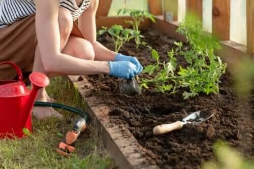 Fem planter til at kontrollere skadedyr i din grøntsagshave