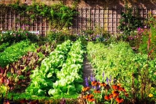 grøntsagshave