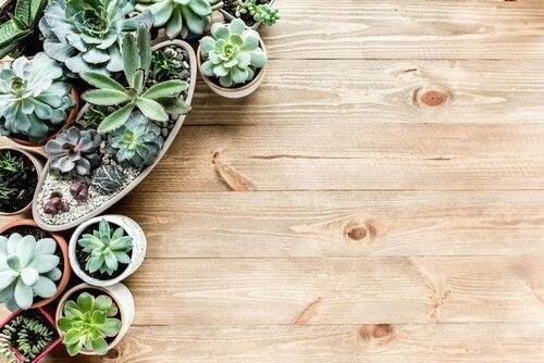 Små planter til hjemmet