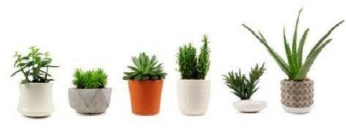 Planter, der kan eliminere giftstoffer og rense luften