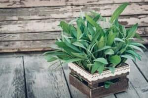plante på terrasse