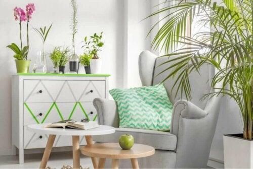 Tips til at dekorere med farverige planter og blomster