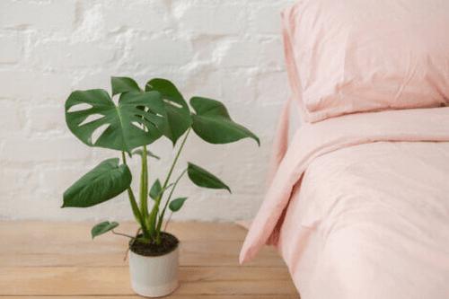 Plante i soveværelset