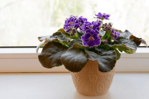 Indendørsplanter, der ikke kræver meget lys