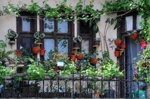Balkon mit vielen Topfpflanzen