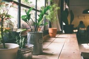 Pflanzen stehen vor einem Fenster