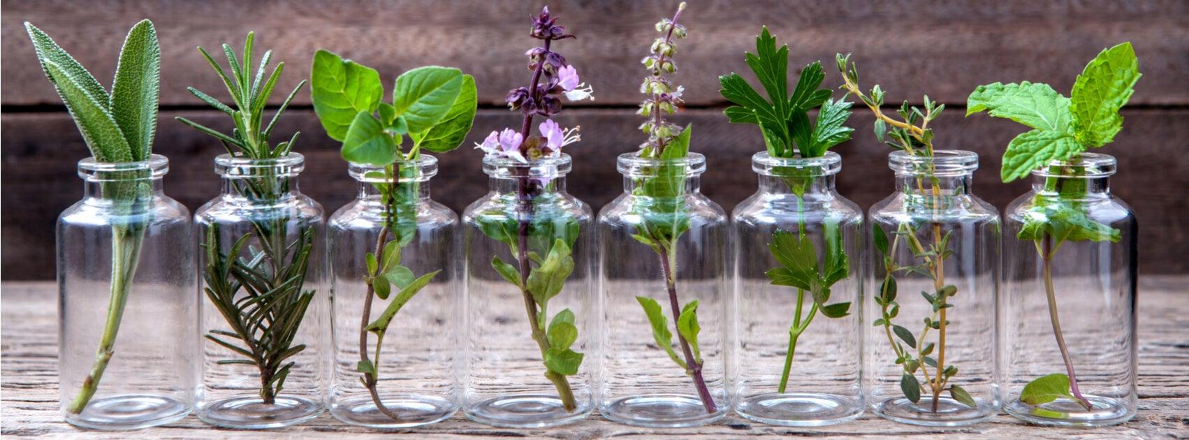 Worauf sollte man bei der Auswahl von Zimmerpflanzen achten?