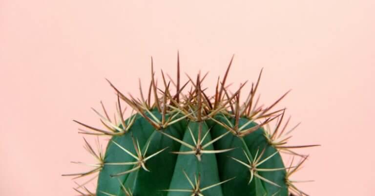 Tipps, um die perfekte Kaktuspflanze auszusuchen
