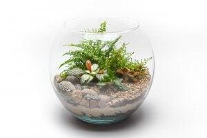 Farn im Glas