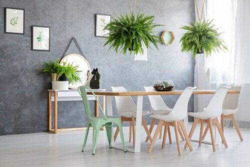 Die Dekoration mit Farnen kann jedes Zimmer in deinem Haus beleben
