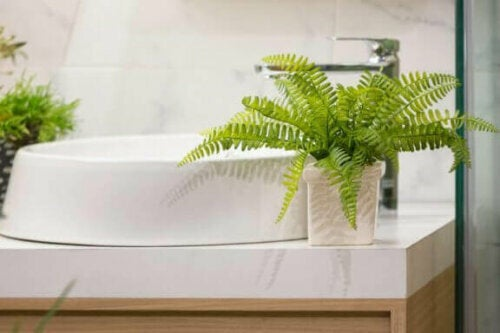 Farne eignen sich auch hervorragend für dein Badezimmer.