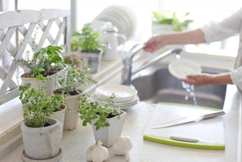 8 inspirierende Ideen, um deine Küche mit Pflanzen zu dekorieren