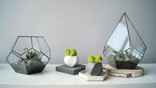 Terrarien sind Glasbehälter, die Leben beherbergen und auf ästhetischer Ebene viele Möglichkeiten bieten.