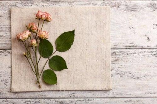 Getrocknete Blumen: Diese Arten eignen sich am besten