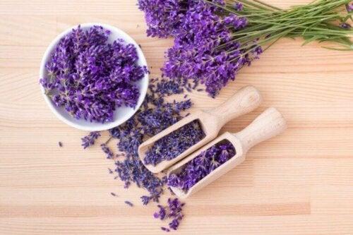 Getrocknete Blumen – Lavendel wird gerne als Trockenblume verwendet