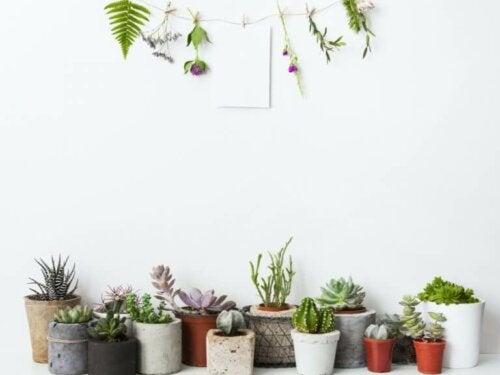 Dekorieren mit Pflanzen: 5 spektakuläre Ideen