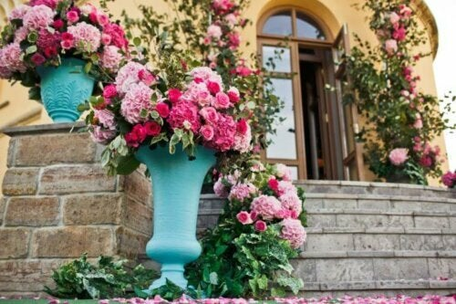 Die richtige Pflege von Rosen: Mit diesen Tipps wirst du lange Freude an ihnen haben!