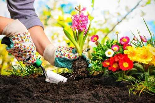 Die 7 besten Pflanzen für den Außenbereich