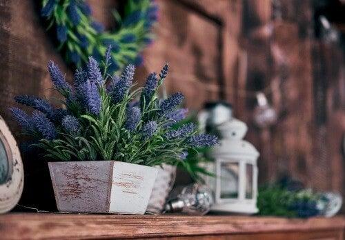 Der rustikale Stil mit Pflanzen
