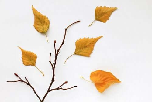 Getrocknete Blätter: 2 Ideen für selbstgemachte Kunstwerke