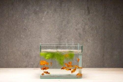 Aquarium dekorieren