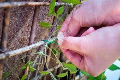 Guide climbing plants