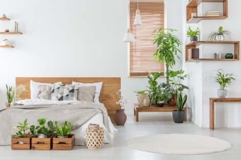 Pflanzen sind der perfekte Weg, um das Aussehen deines Hauses aufzuwerten