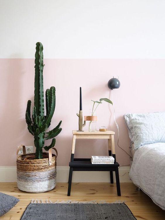 Cactus para decoración de la habitación