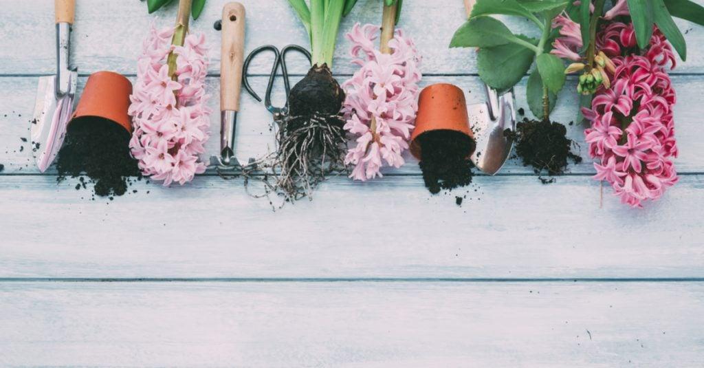 ¿Cómo elegir las flores para la ventana?