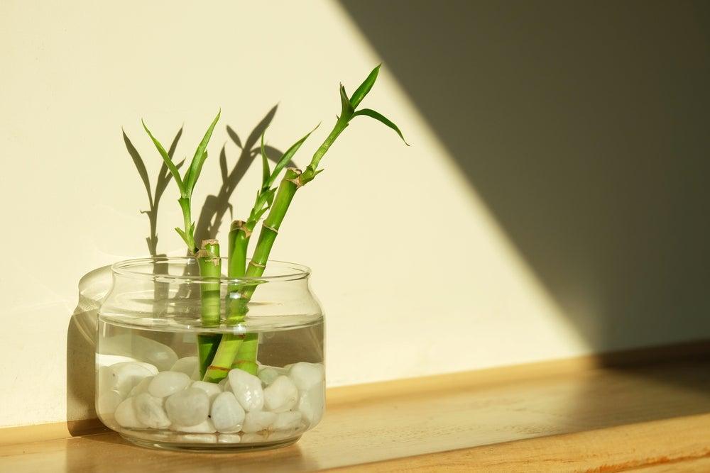 Ramas de bambú dentro de un jarrón con la base de piedras blancas
