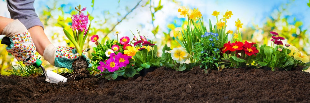 Plantas para tu jardín con flores coloridas.