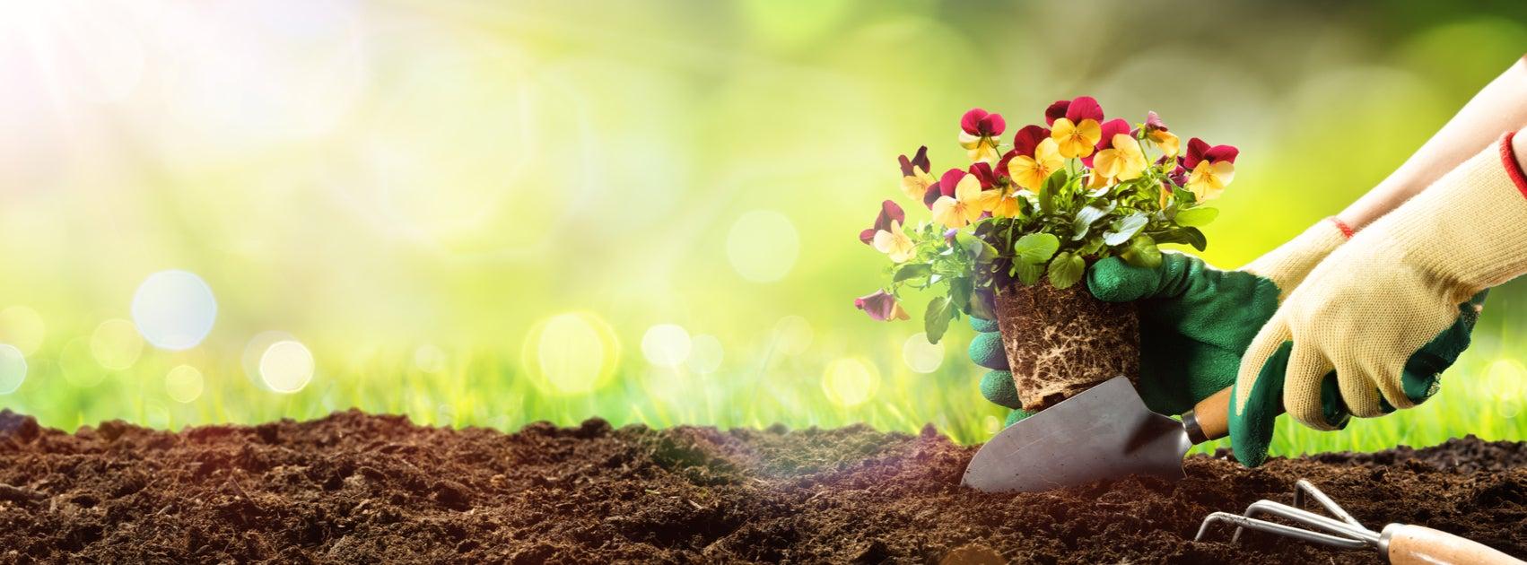 6 especies de plantas para tu jardín