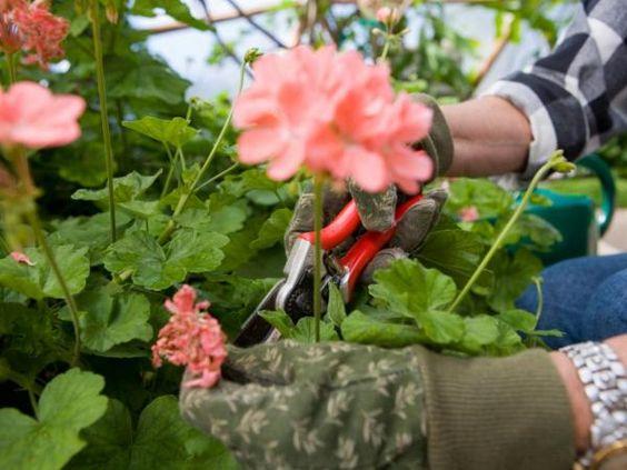 Qué debes tener en cuenta antes de podar tu jardín