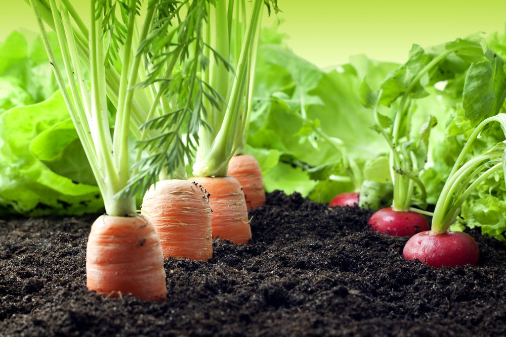 Huerto ecológico para tu jardín exterior.