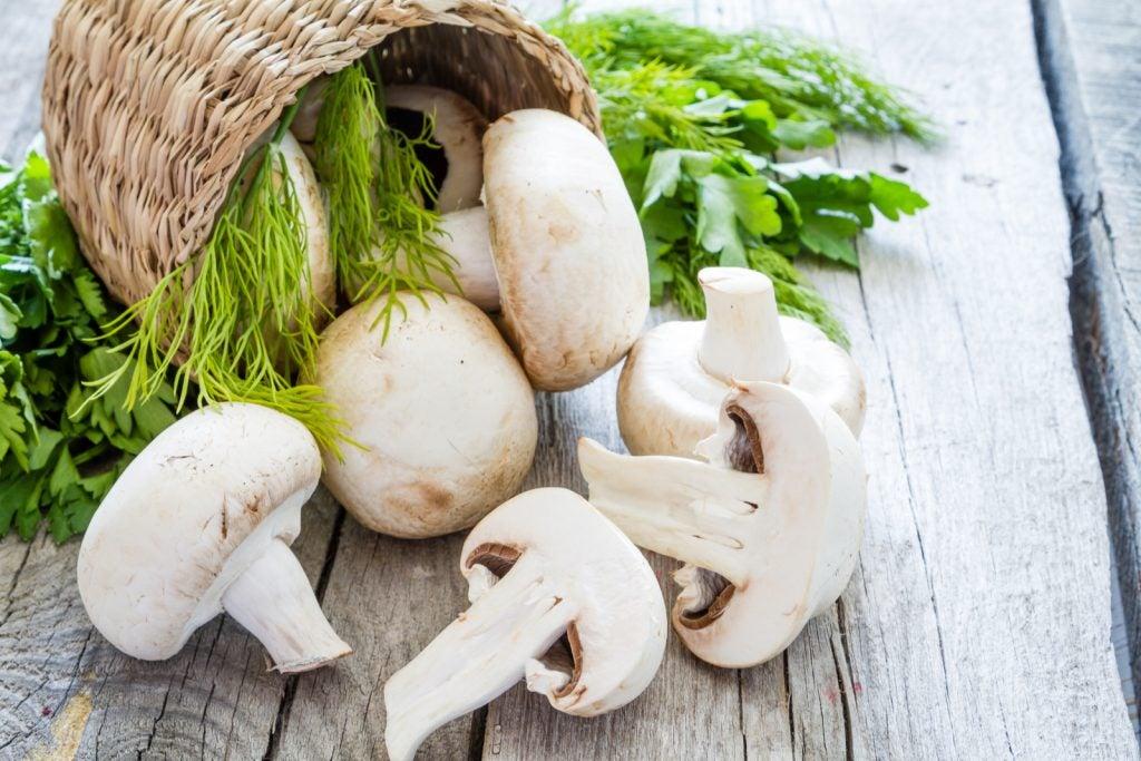 Consejos para cultivar champiñones en casa.