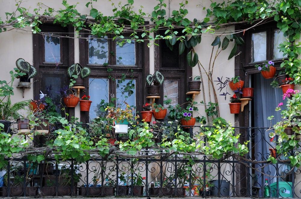 Balcón decorado con macetas y una enredadera.