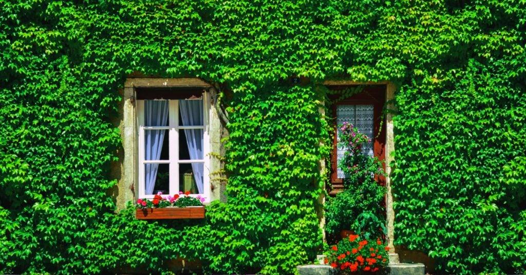 La hiedra en exteriores: vallas, verjas y muros
