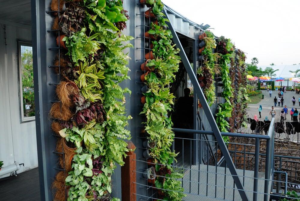 Jardín vertical colgante.