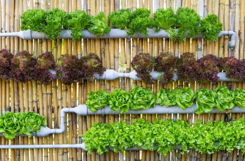 Jardín vertical con tuberías.