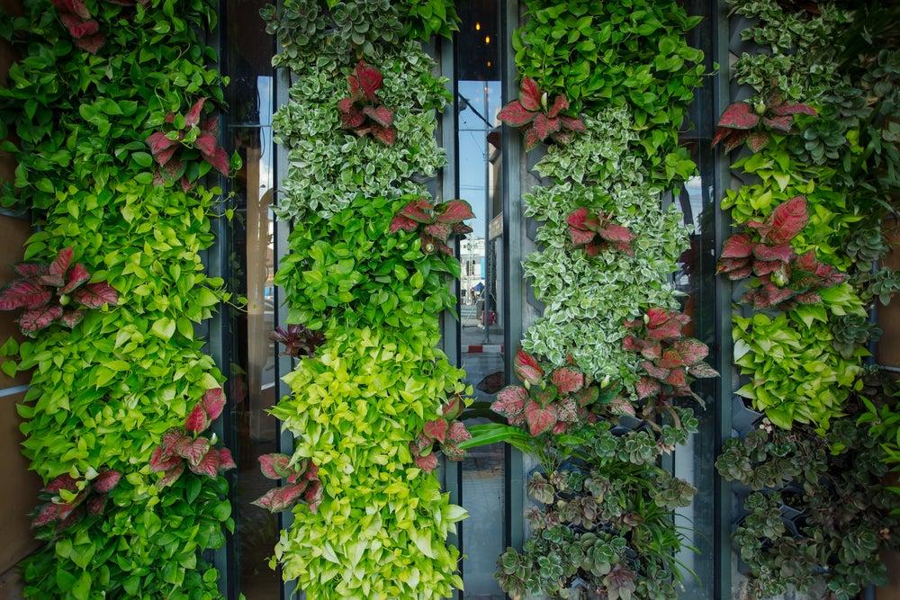 Enredaderas para tu jardín vertical.