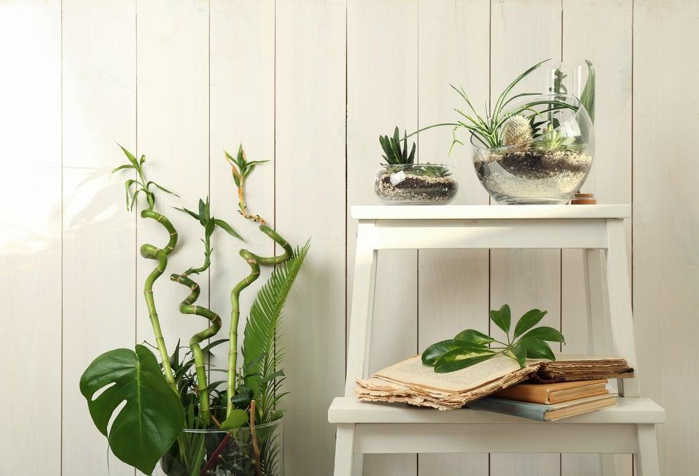 Jarrones de cristal redondos que contienen dentro plantas.