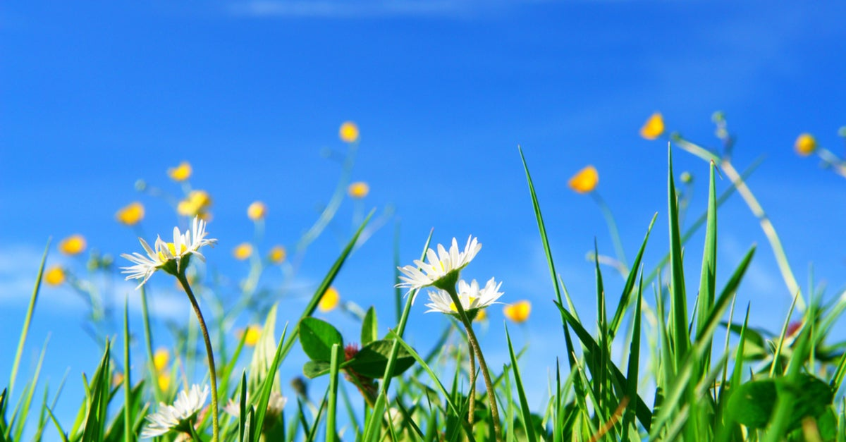 Consejos para quitar las malas hierbas de tu jardín