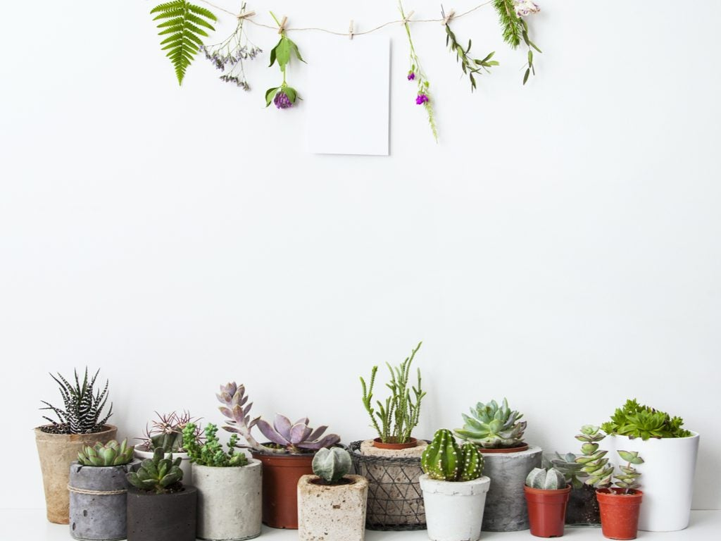 5 ideas espectaculares para decorar con plantas