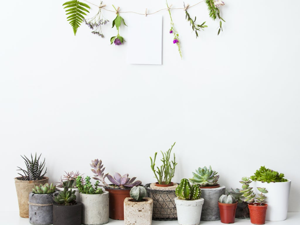 5 great ideas to decorate with plants